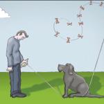 perro y cometa